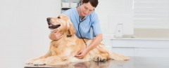 ForPressRelease.com - Taking Care Of Their Pet Made Easier For Owners With The Finest Rochester Hills Vet At Bayne